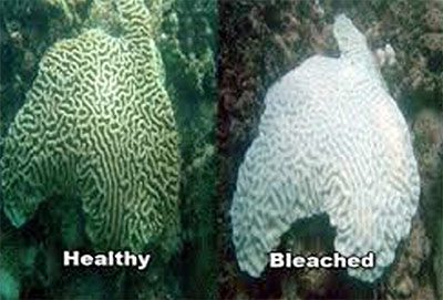 The Heat is On!  Divers Can Help Monitor Coral Bleaching