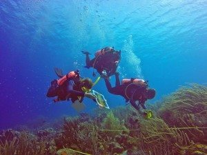 Do Divers Impact Reefs?  A New Scientific Study Gives Insight