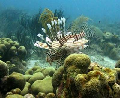 Bruce Bowker's Carib Inn Adds Additional Lionfish Hunts to Klein Bonaire
