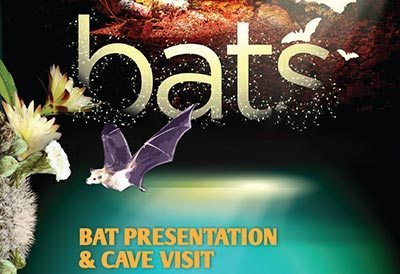 Learn about How Bats Help Bonaire's Eco-Systems