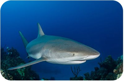 Sharks are now protected in the Yarari Sanctuary.