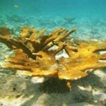 Coral Restoration Foundation Bonaire Receives Government Funding