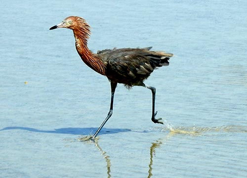 Weekend Events Include Birding at Lac and the Annual Jong Bonaire Fun Walk