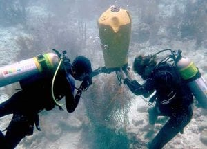 STINAPA relocates corals at Bonaire's Salt Pier