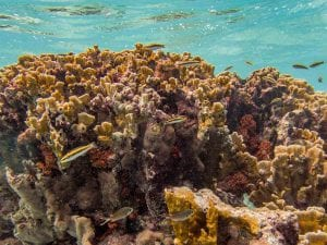 Top Things to Do in Bonaire If You Don't Dive