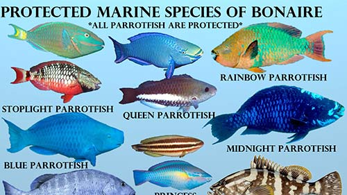 Marine Species on Bonaire Which Have Protection