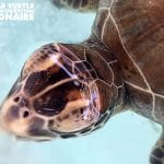 Seabirds and Juvenile Green Sea Turtle are Successfully Rehabilitated on Bonaire