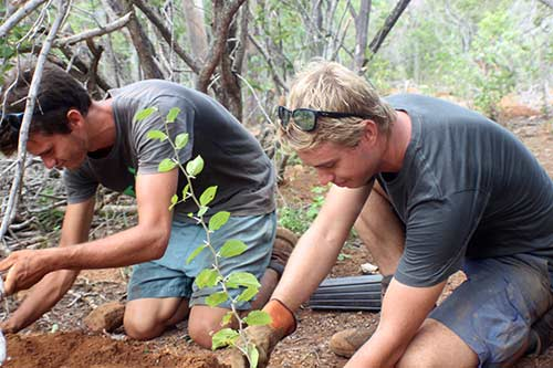 Planting trees on Bonaire with Echo Foundation, creating reforestation areas for the island.