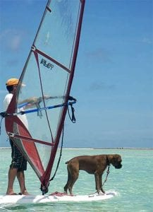 Even dogs learn to windsurf on Bonaire!
