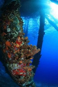 One of the beautifully encrusted pilings at Salt Pier, Bonaire.