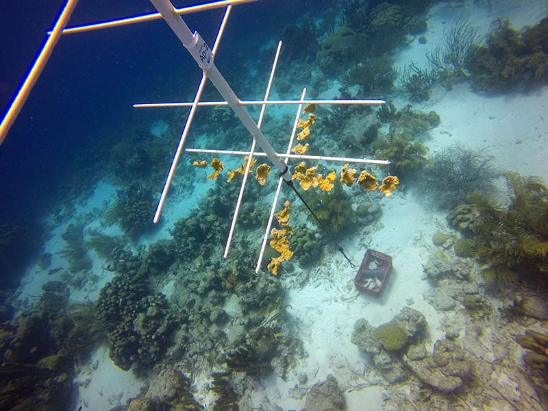 New Pop-up Coral Nursery Installed at Bonaire Dive Site Oil Slick Leap