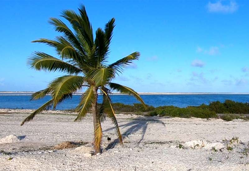 Bonaire's Mangroves Ask for Help Against the Sargassum!