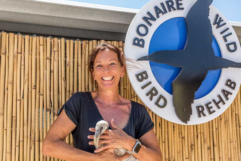 Bonaire Wild Bird Rehab helps Bonaire's birds.