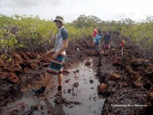 Restoration of the mangroves in Bonaire's Lac Bay.