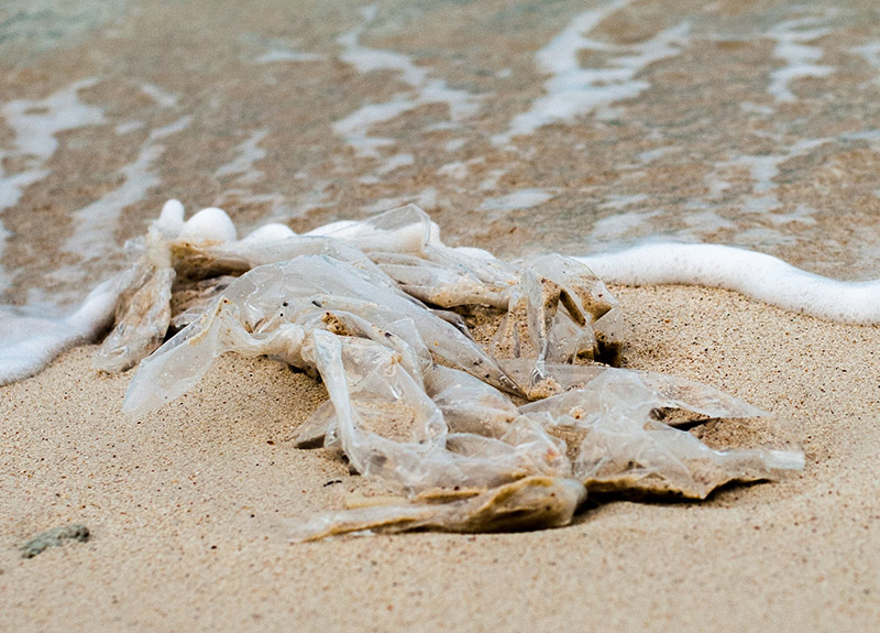Bonaire Places Ban on Plastic Bags and Foam Waste Products (Styrofoam)