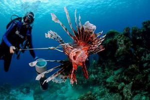 Ten years of lionfish management on Bonaire.