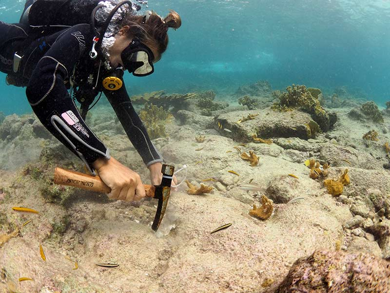 763 Elkhorn Corals Planted at Bonaire's Oil Slick Leap