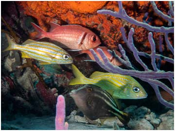 The reefs of Bonaire show a high concentration of fish species.