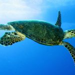 STCB (Sea Turtle Conservation Bonaire): A Year in Review